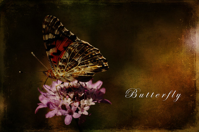 Texture Butterfly