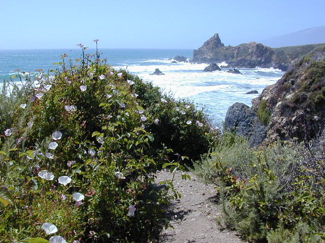 Wildflowers on Central Coast