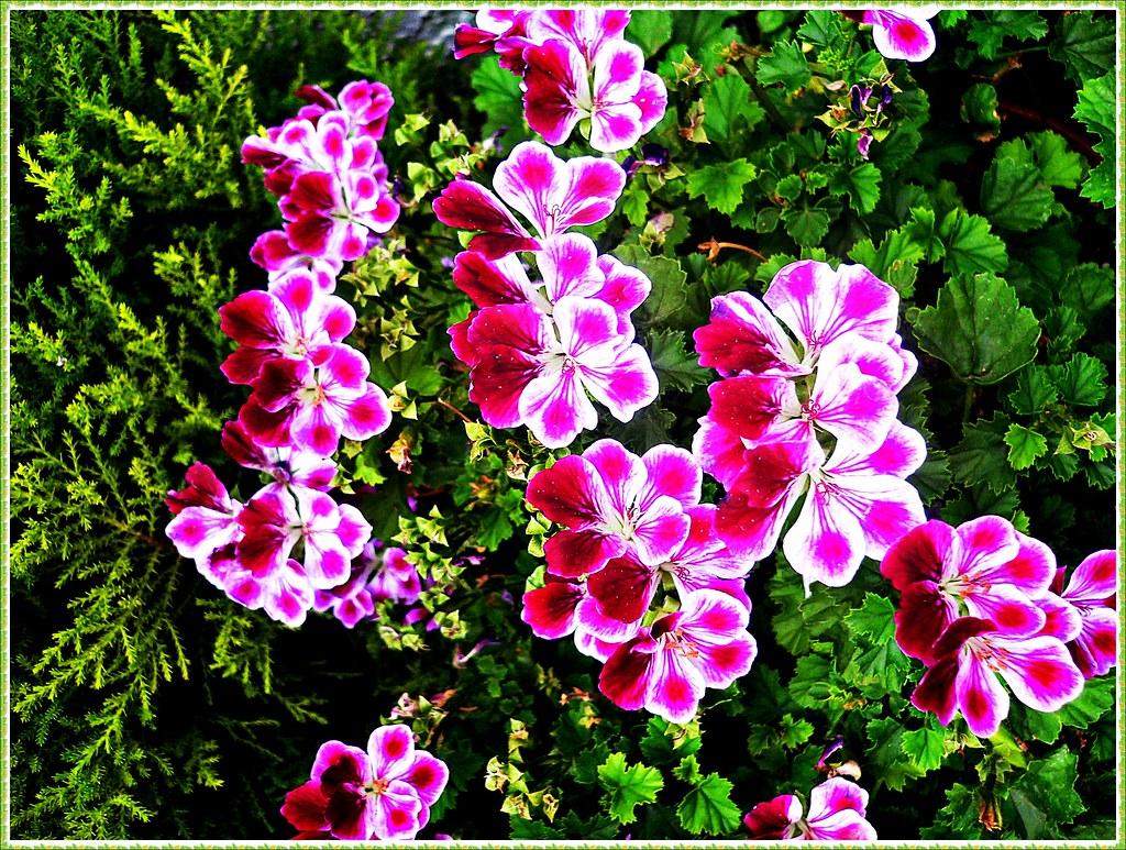Feliz Fin De Semana Amigos Con Estas Bonitas Flores Os D