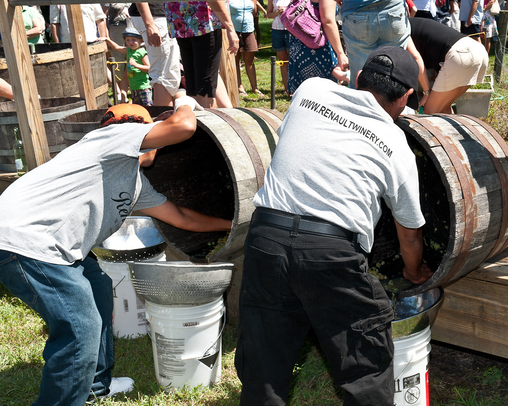 Historic Renault Winery Grape Stomping, Egg Harbor, New Jersey