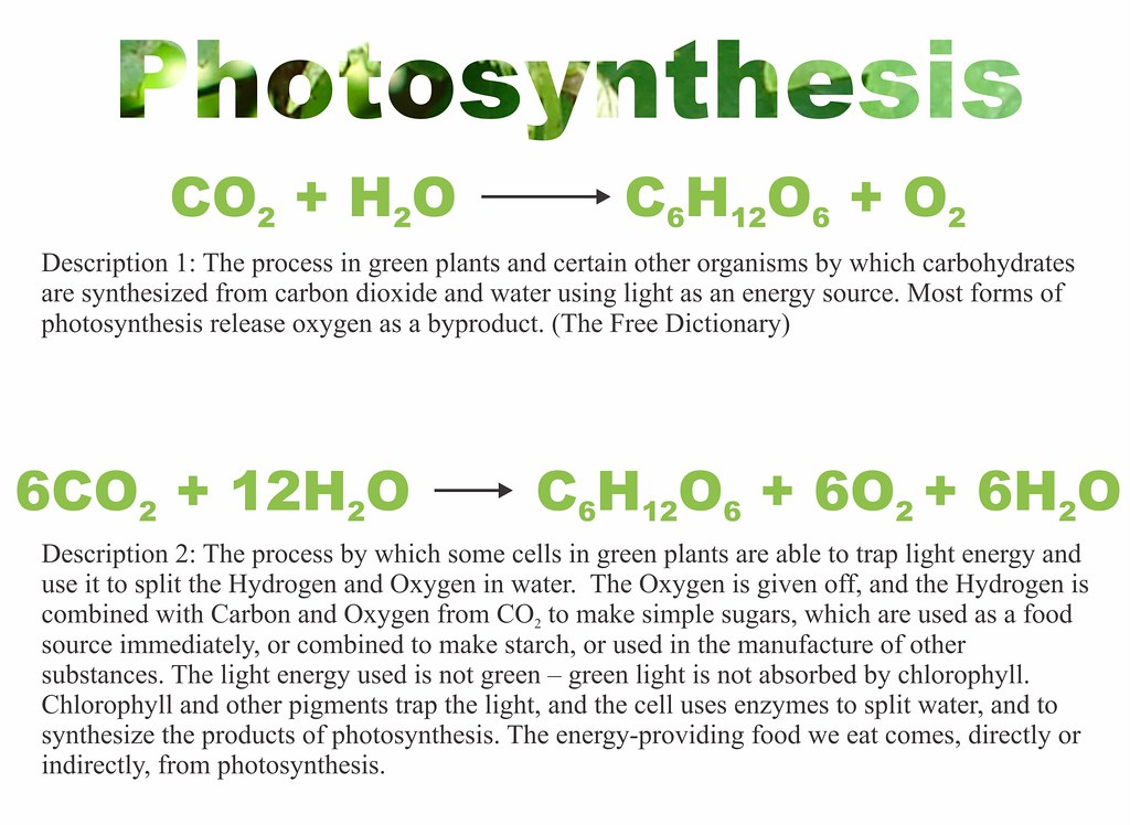 Photosynthesis equations and descriptions