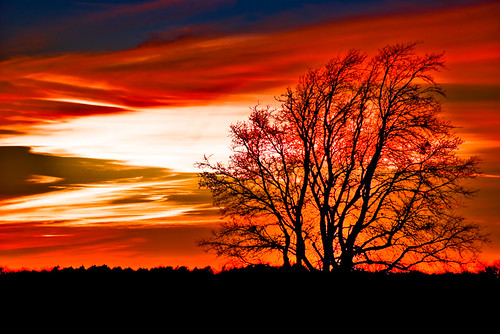 sunset tree art christmaseve