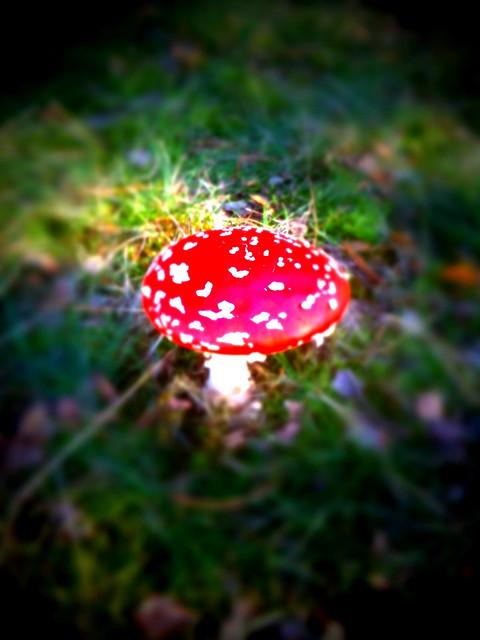 Der verwunschene Pilz