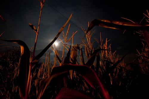 longexposure sky moon sc field night clouds dark corn conway tripod southcarolina full midnight gitzo strawberrymoon arcatech gt2531 nikonafsnikkor1635mmf4gedvr tscf2010ar