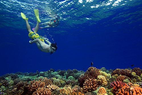 Snorkeling | by keyweststeamplant