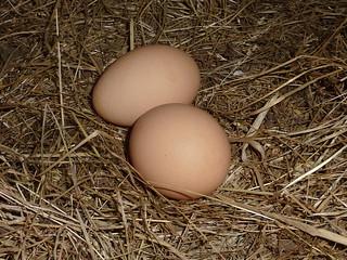 2 eggs in nest | by brittgow