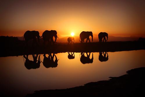 africa sunset reflection sunrise southafrica south elephants worldcup wonderland flickraward 1on1reflectionsphotooftheweek greaterphotographers 1on1reflectionsphotooftheweekmarch2011