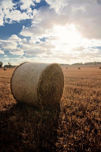 Golden wheatfield | by Zee Chaudhry