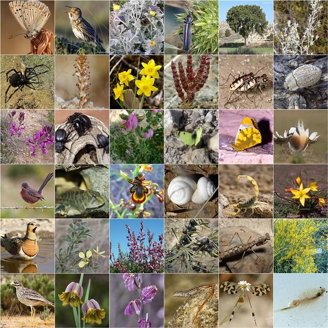 Ebro Valley typical biodiversity