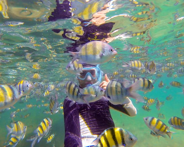 Koh Samui, snorkel entre peces, de las mejores islas que ver en Tailandia