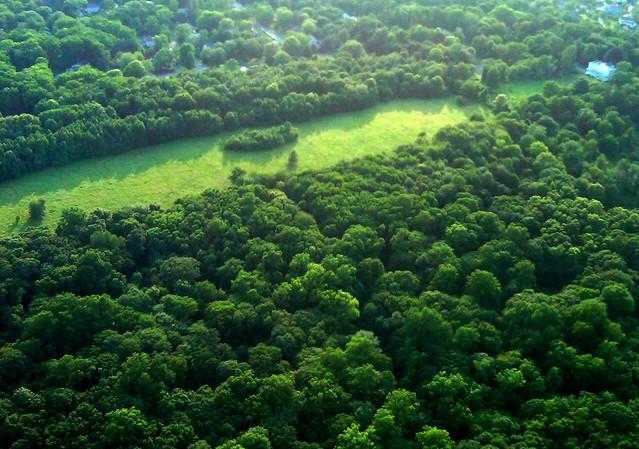 Jay Meadow, Rye, NY - Unbalanced ecosystem, invasives