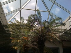 Palm Tree's in Skylight