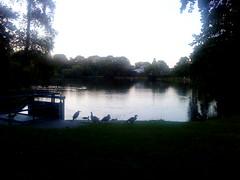 Zuiderpark, Den Haag
