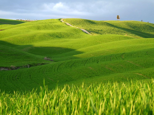 Verde   by lo.tangelini
