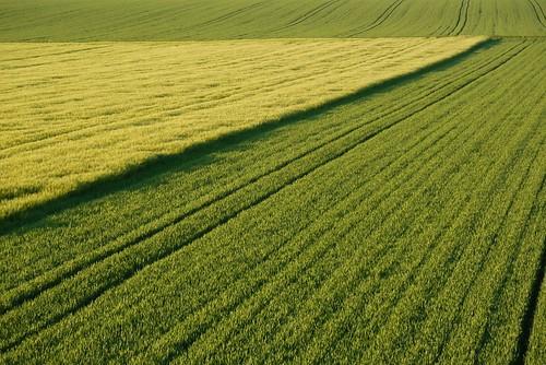 sunset summer green nature field barley yellow germany deutschland corn cornfield sommer landwirtschaft natur feld rye gelb agriculture korn kornfeld gerste roggen grün