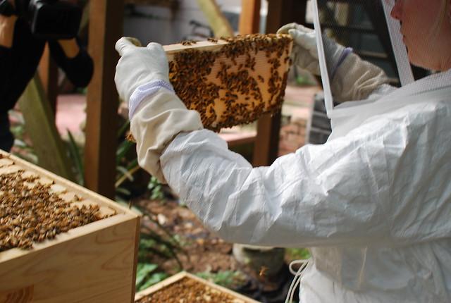 honey and wax make each level heavy