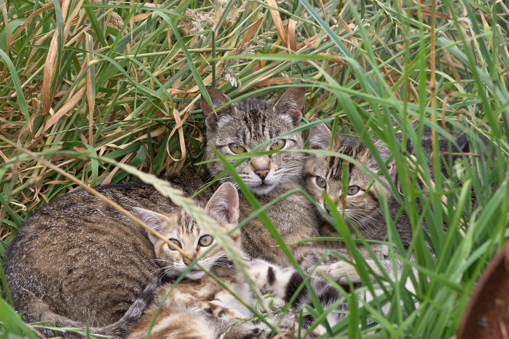 Mother and Kittens by Chriss Pagani