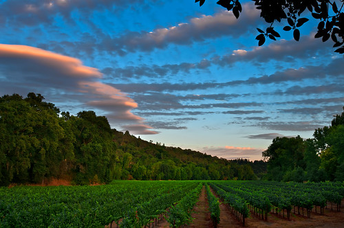 california ca sky is harvest agriculture grape approaching cloudt saariysqualitypictures mygearandmepremium