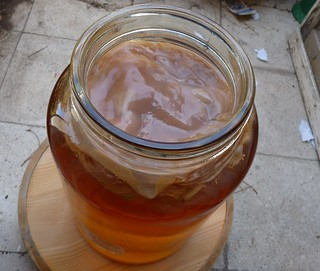 Kombucha Tea-2 | by zeevveez