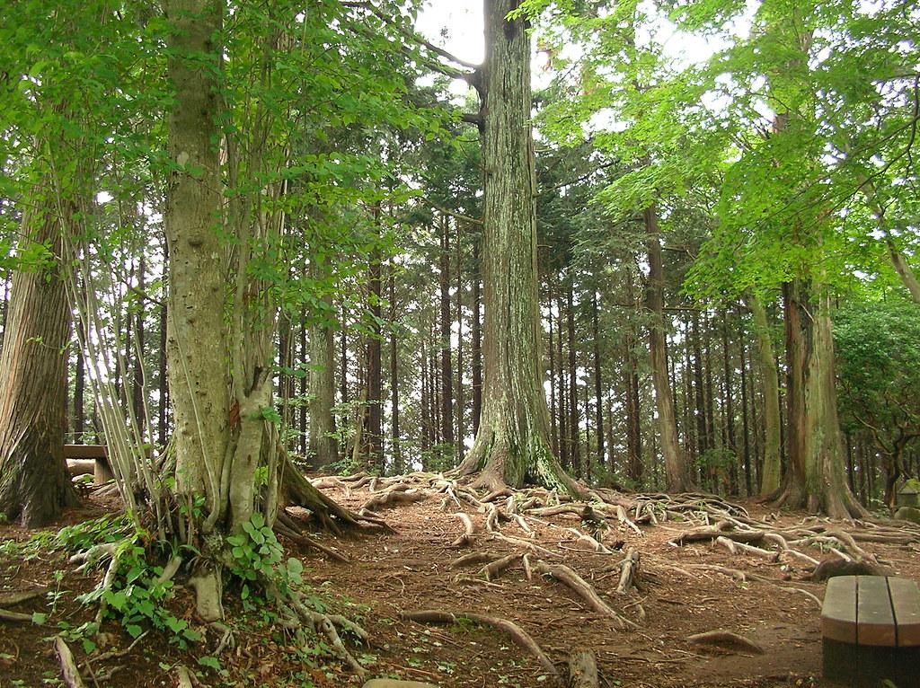 高水山の頂上(高水三山ハイキング) Takamizu-Sanzan Hiking
