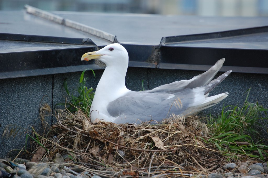 Seagull Nest | Sean Campbell | Flickr