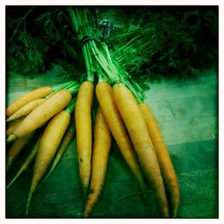 harmony valley carrots   by mrgarin