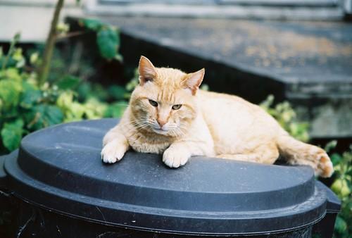 Orange Tomcat On His Throne by Chriss Pagani