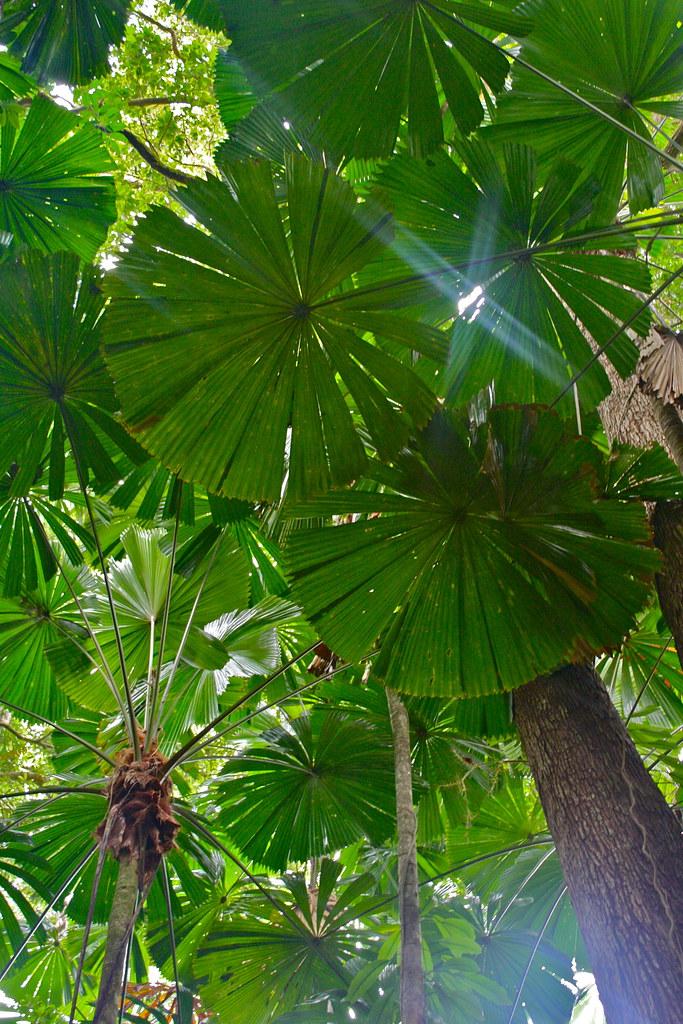 The Daintree Rainforest - 21