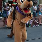 Pluto mentre sta arrivando a salutare Filippo!!