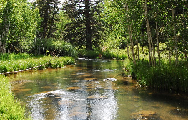 Duck Creek Tranquility