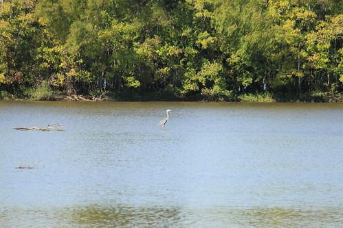 trees lake heron greatblueheron lakefaussepointestatepark