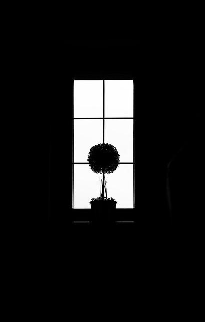 un árbol en la ventana