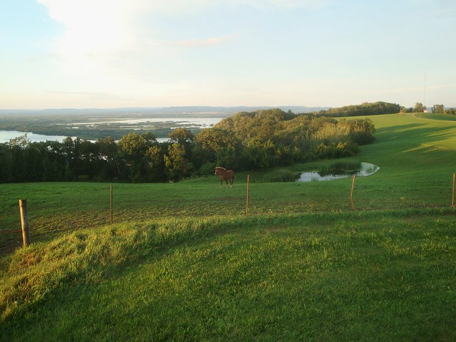 Pasture on Bluff Overlooking Mississippi River
