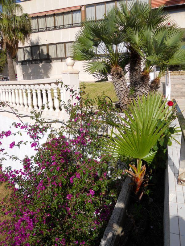 Buganvillas y palmeras