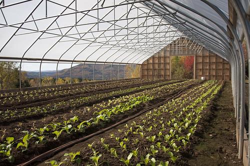 101010 New Earth Organic Farm
