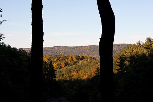 park trees usa fall forest stonybrook gorge newyorkstate westrimtrail stonybrookstatepark