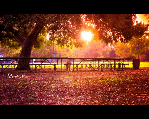 california park morning autumn tree colors leaves sunshine sunrise canon picnic run powershot shade tables esther rosebowl pasadena hdr s90 aquaticcenter longrun runography