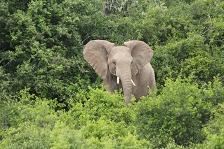 Elephant | by Jon Mountjoy