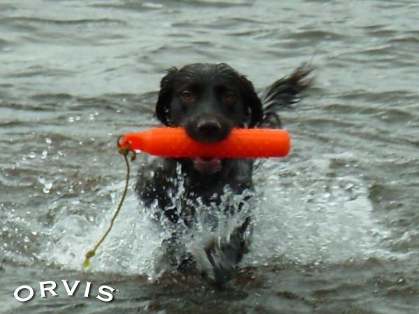 Orvis Cover Dog Contest - Jezi | Water Drill - Dana/Bret, Du