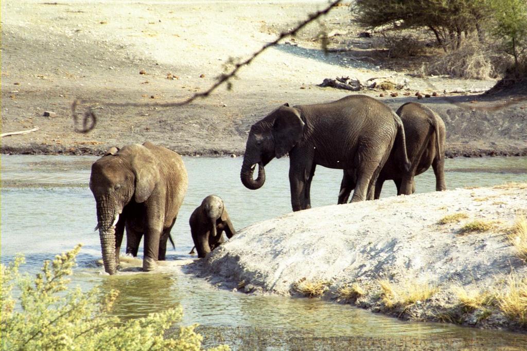 Elephants at the Water Hole at Tau Game Lodge - Madikwe Ga…   Flickr