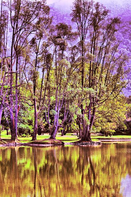 pepohonan usang