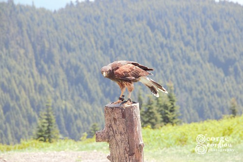 Canada_20170704_001397 (Small) WM | by gg2cool