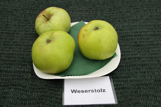 Weserstolz