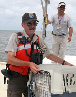 Tom MacKenzie with oiled brown pelican on Barataria Bay