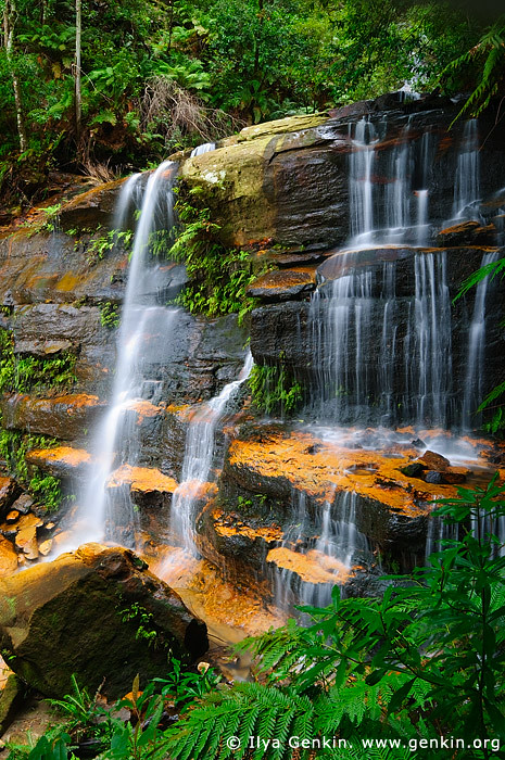 Flat Rock Falls Blue Mountains National Park Nsw Austra