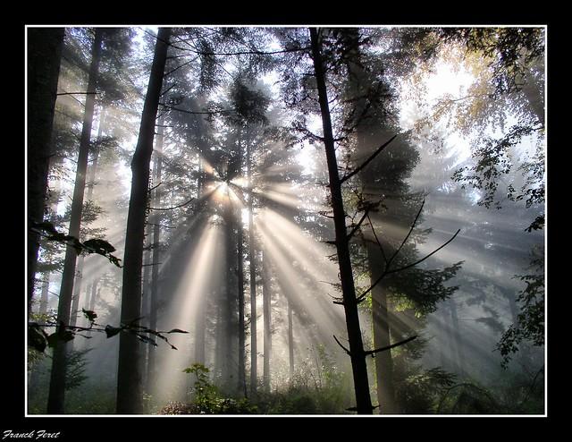 rayons de soleil dans la foret d'alaise