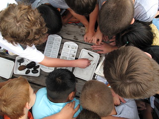 Students gathered around the macroinvertebrate table on the South Toe River | by USFWS/Southeast