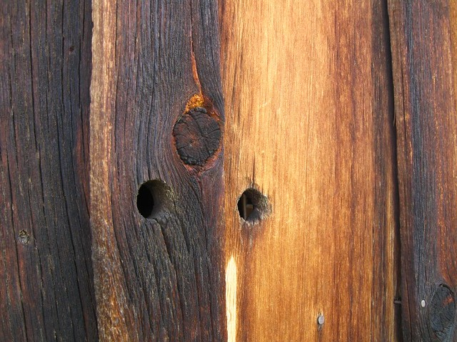 barn boards - Bodie