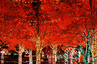 Christmas Trees   by CThomasCaldwell