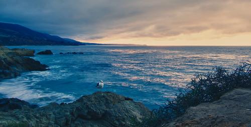 sunrise rocks seagull leocarrillo